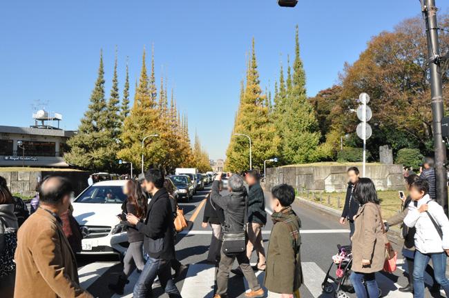 右をみると、いちょう並木が。この景観は見事なのですが、横断歩道なので、くるま等にはお気をつけください